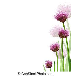 Flower Border, Isolated On White Background, Vector ...