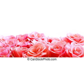 Flower border - Pink rose border with white space for copy