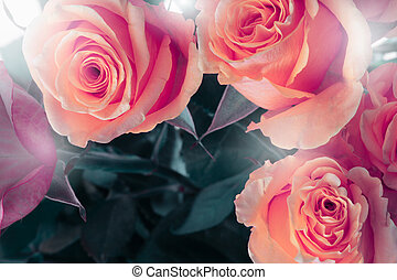 Flower bouquet background. Red roses.