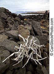 flower branch abstract pond water coastline salt in  lanzarote spain musk  rock stone sky     and summer