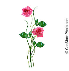flower buds of roses isolated on white background