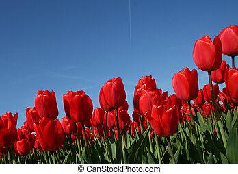 Flower bulbs against a blue sky
