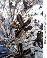 Flower bush with icy leaves