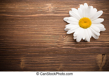 flower., camomile