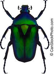 Flower chafer - An illustration of a green metallic beetle...