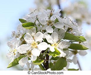 flower cherry
