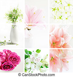 Collage of beautiful flowers in fresh colors