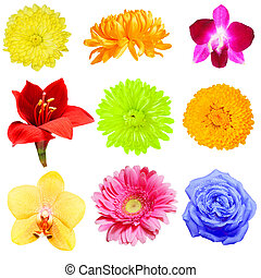 Flower Collection - Set of colorful flower isolated on white
