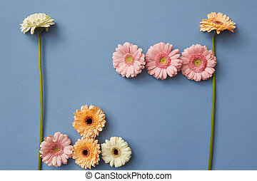 Flower composition of white, pink and orange gerberas on a blue paper background