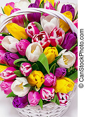 Flower composition with multicolored tulips in basket