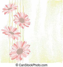 flower daisy pink