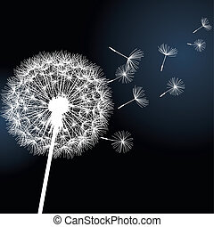 Flower dandelion on black background - Flower dandelion...