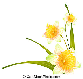 flower - drawing of beautiful narcissus flower with green...
