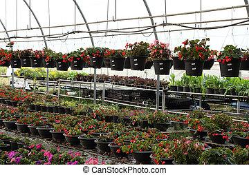 Flower farm nursery in green house