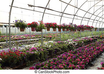 Flower farm nursery