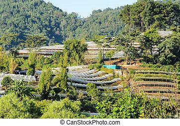 Flower farm on Doi Inthanon mountain in Chiang Mai, Thailand.