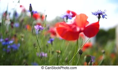 Flower field. A variety of colors in the meadow. Change...
