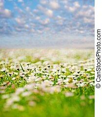 Flower field over blue cloudy sky