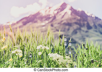 Flower field with snow mountain and