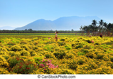Flower fields in Andhra Pradesh state India