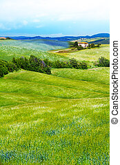 Flower filed in Tuscany landscape, Italy - Flower filed with...