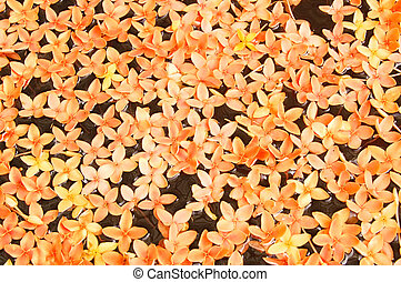 Flower float - Floating orange flowers in a decorative...