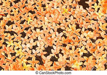 Flower float - Floating orange flowers in a decorative...