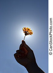 Flower For You - holding a flower against blue sky