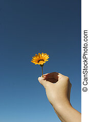 Flower For You - This photograph was shot at my backyard,...