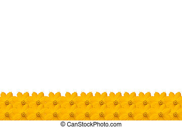 Flower frame with yellow flowers