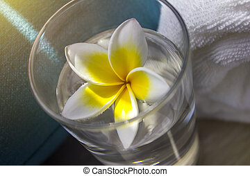Flower Frangipana in a glass with water close-up. The concept of SPA. Copy space