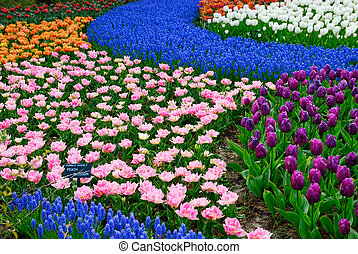 flower garden - beautiful garden of colorful flowers in...