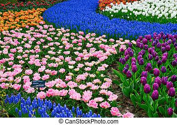flower garden - beautiful garden of colorful flowers in...