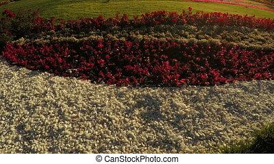 Flower Garden in city park - In city park beautiful flower...
