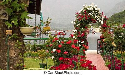 Flower garden near Dal Lake