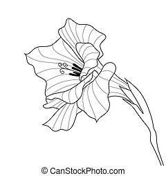 Flower gladiolus Contour graphic art - Black and white line-...