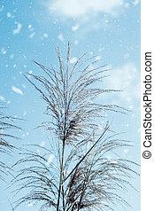 Flower grass with blue sky.