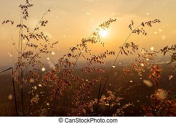 Flower grass with sunset sky