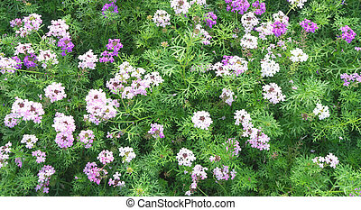 Flower Green grass on background