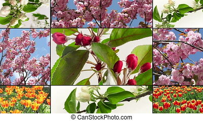 flower growing, collage. Multiscreen.