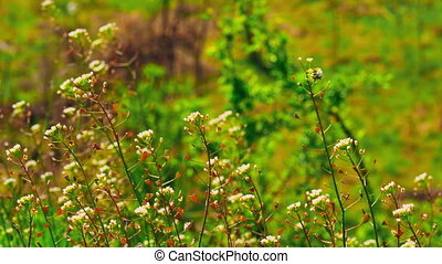 close up wildflowers in sunlight fluttering on the wind beautiful outdoors meadow