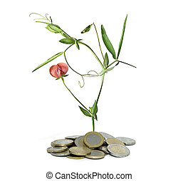 flower growing from coins
