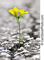 Flower growing from crack in asphalt - Green grass growing...