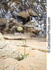 Flower growing out of the stone