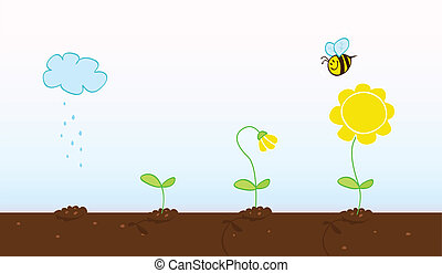 Process of growing plant in four stages. Vector Illustration.