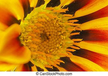 Flower head close -up