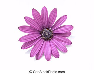 Flower Head - Design Element: Purple flower head, Spanish...