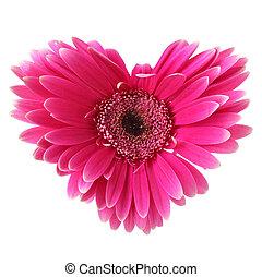 Flower heart - Flower like heart isolated over white ...