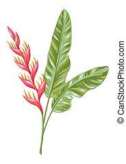 flower., illustration, heliconia, exotique