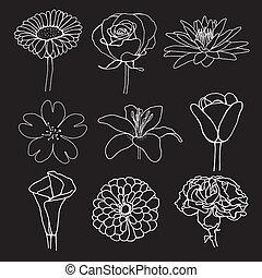 flower illustration sketch design